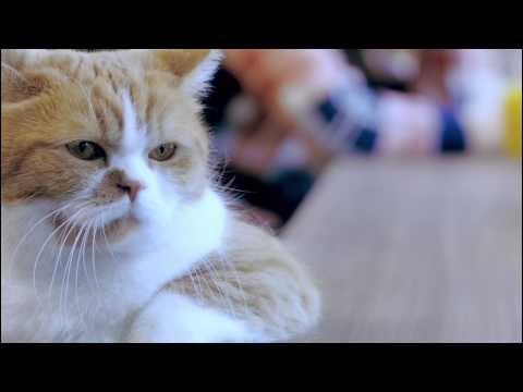 YモバイルCM、猫